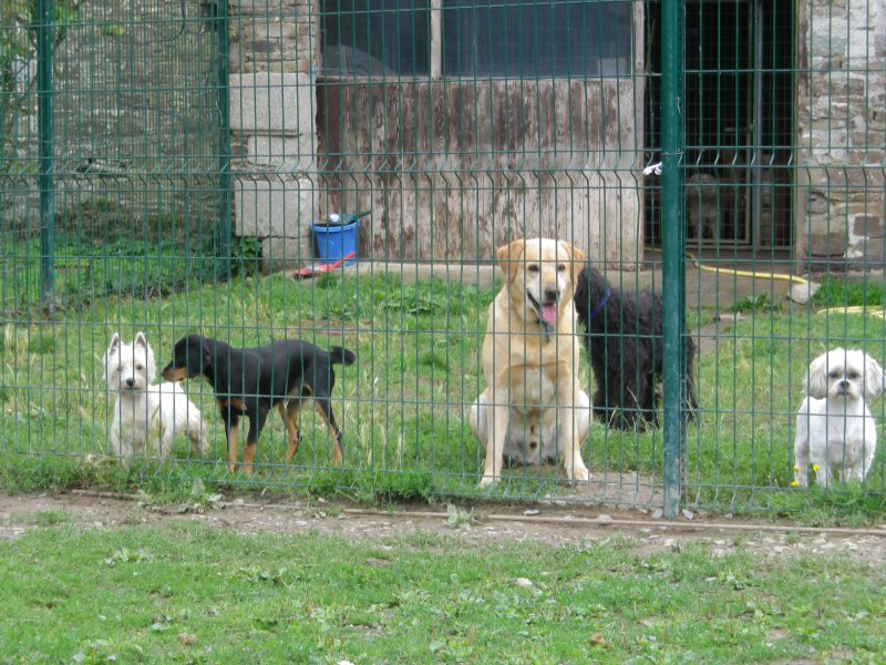 CHIENS PENSION 015