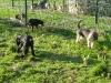 chiens pension 2 004